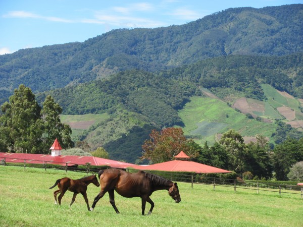 Haras Horse Farm
