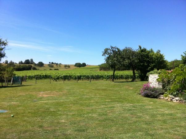 view of vineyard from garden