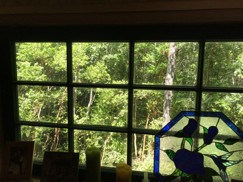 Forest view from the cabin