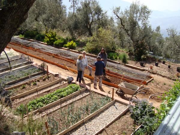 Productive Vegetable Terraces